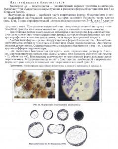 blastocystys