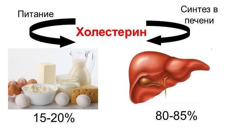 Холестерин, атеросклероз